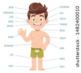 child body parts. boy with eye  ... | Shutterstock .eps vector #1482400010
