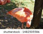 Flamingo Wondrous Bird ...