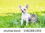 Stock photo portrait of a chihuahua puppy and a kitten on green summer grass empty space for text 1482881303