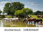 Cows And Ponies At Lake On A...
