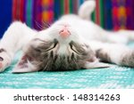 Stock photo small kitten sleeping on the bed 148314263