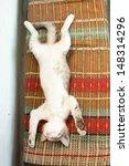 Stock photo small kitten sleeping on the bench 148314296