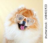 Stock photo pomeranian dog wearing sunglasses 148401923