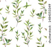 watercolor myrtle. vintage... | Shutterstock . vector #1484053349