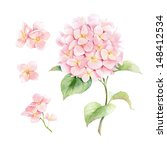 Watercolor Pink Hydrangea.