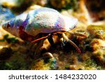 Underwater photo of Mediterranean Hermit crab - Clibanarius erythropus