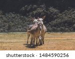 Three Dunkeys In The Andes ...