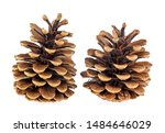 Two Beautiful Pine Cones...