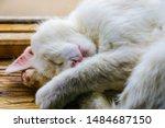 Stock photo sleeping kitten head on the windowsill of the window kitty pet animal portrait lovely little cat 1484687150