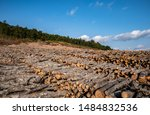 Deforestation In Kaz Mountains...
