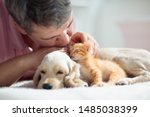 Stock photo cat and dog sleeping together next to a man kitten and puppy taking nap with owner home pets 1485038399
