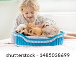 Stock photo child with baby dog and cat kids play with puppy and kitten in a basket little boy and american 1485038699
