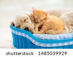 Stock photo cat and dog sleeping together in a basket kitten and puppy taking nap home pets animal care 1485039929