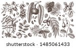 hand drawn nut on trees and... | Shutterstock .eps vector #1485061433