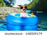 dog on  blue air mattress  in... | Shutterstock . vector #148509179