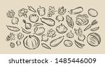 many hand drawn vegetables.... | Shutterstock .eps vector #1485446009