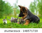Stock photo german shepherd dog and five little kittens 148571720