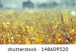 Yellow Flowers In A Meadow Bokeh