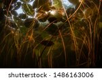 A Chaotic Tangle Of Lily Pads...