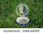 Butterfly In A Jar Being...