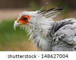 secretarybird  sagittarius... | Shutterstock . vector #148627004
