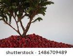 Detail Of A  Cypress Bonsai An...