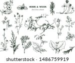 herbal illustration on label... | Shutterstock .eps vector #1486759919