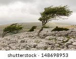 wind blown tree  twistleton... | Shutterstock . vector #148698953