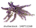 lavender isolated over a white... | Shutterstock . vector #148711268