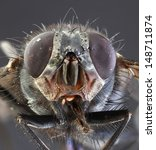 Small photo of Musca Domestica Low Scale Magnification