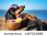 Beautiful Dog Of Dachshund ...