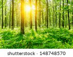 forest   Shutterstock . vector #148748570