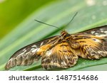 Macro Beautiful Butterfly...