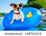 dog on  blue air mattress  in... | Shutterstock . vector #148762313