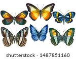 Set Of Tropical Butterflys On...