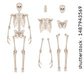 human skeleton. body parts... | Shutterstock .eps vector #1487943569