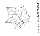 Maple Tree Leaf Hand Drawn...