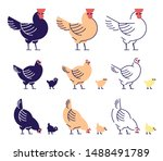 Chickens Flat Vector...
