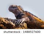 republic of ecuador. iguana... | Shutterstock . vector #1488527600
