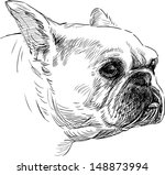 portrait of a french bulldog | Shutterstock .eps vector #148873994