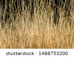 Close Up Of A Meadow With Tall...