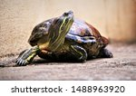 Stock photo pet tortoise staring and looking seriously at something interesting 1488963920