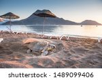 Loggerhead Sea Turtle (Caretta caretta), digging sand at the beach to lay eggs. Close-up photo. Adrasan - Antalya