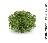 realistic trees or bushes on...   Shutterstock .eps vector #1489169606