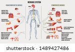 nervous system and its... | Shutterstock .eps vector #1489427486