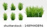 green grass set. fresh herb ... | Shutterstock .eps vector #1489440896