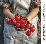 farmers holding fresh tomatoes... | Shutterstock . vector #1489464713