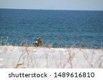 Winter Sea And Steller's Sea...