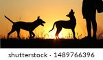 Stock photo silhouettes of puppies at sunset three puppies belgian shepherd dog malinois puppies many dogs 1489766396
