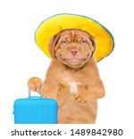 Smiling Puppy With Summer Hat ...